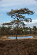 10th Feb 2019 - Tree at the pond