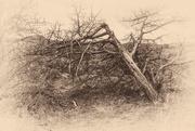 10th Feb 2019 - dead wood