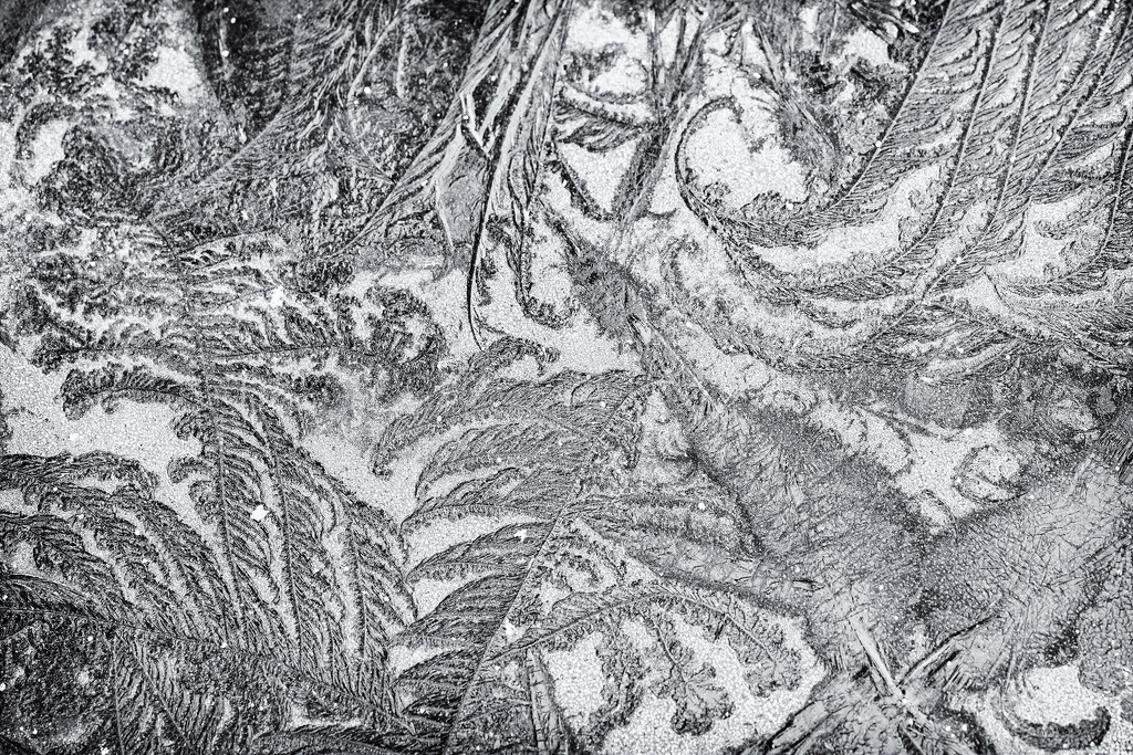 Frost Patterns On the Hot Tub Cover  by jgpittenger