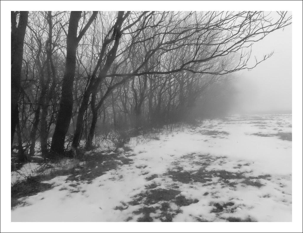 Fog and Tree Line by mcsiegle