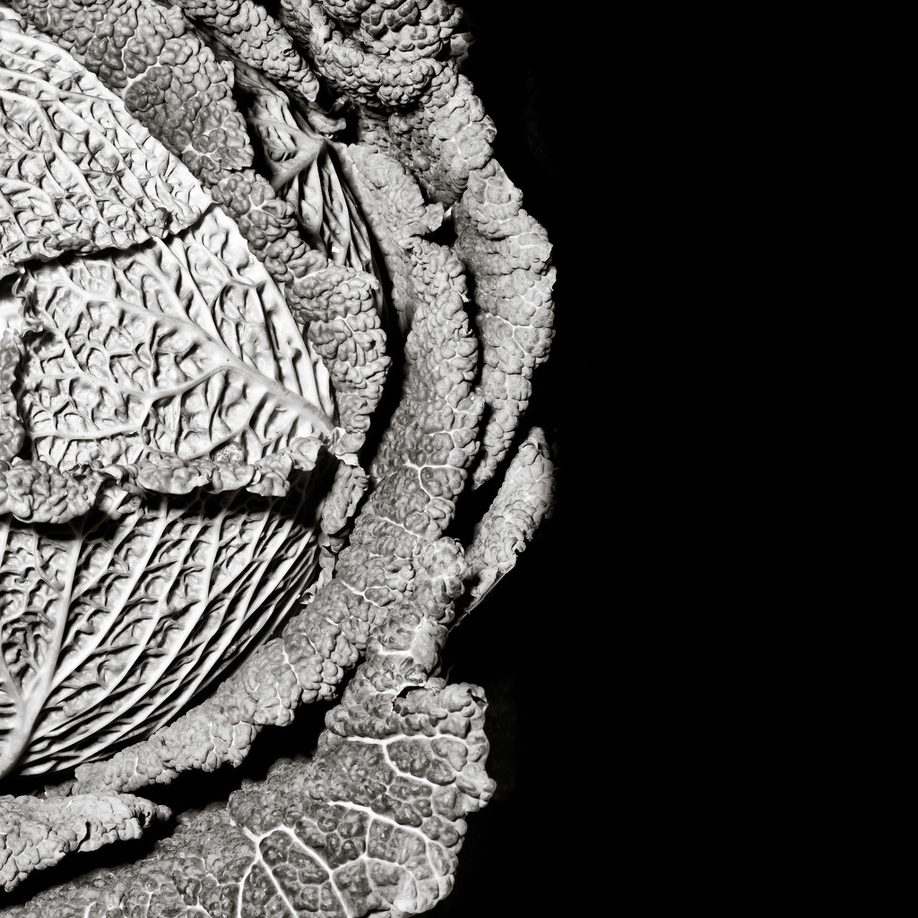 FORF10 - Textures 7:  Cabbage by vignouse