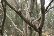 5th Feb 2019 - Squirrel