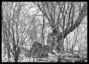10th Feb 2019 - Tree Textures