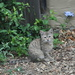 Kitten by kgolab