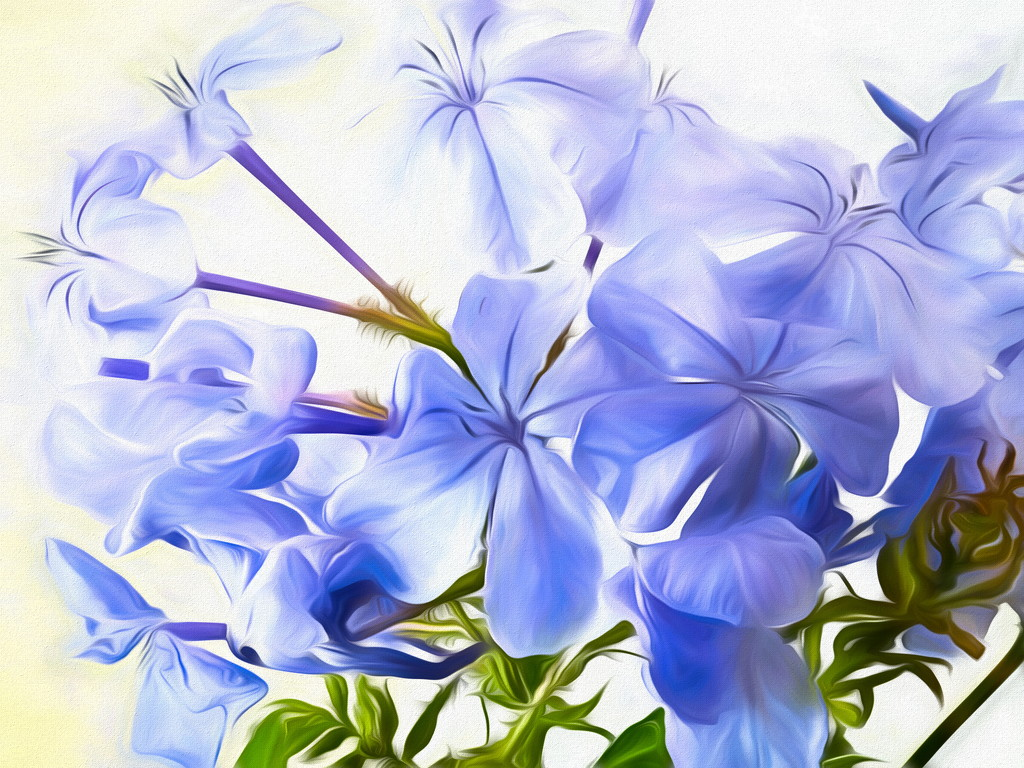 Yes, we also have blue Plumbago by ludwigsdiana