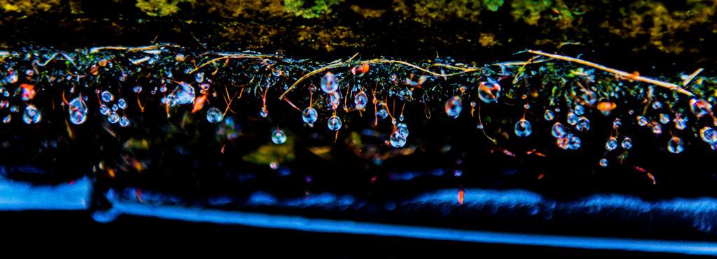 Feelin' blue.......Mondays should NOT exist! by gigiflower