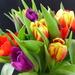 A beautiful bunch of tulips