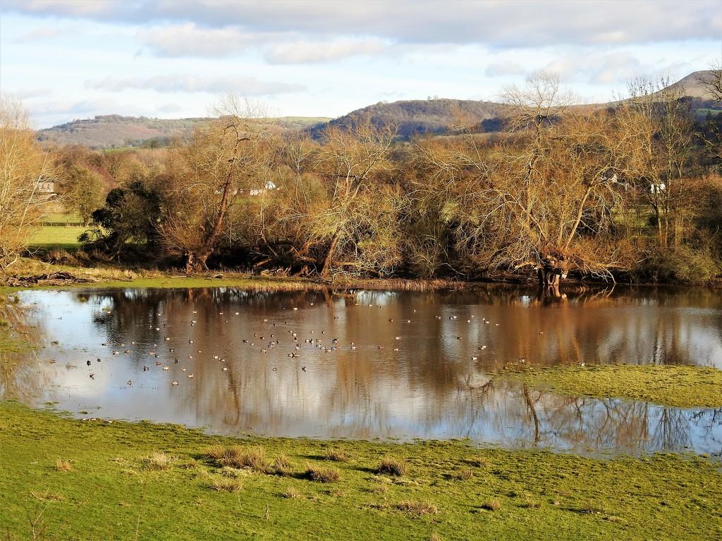 Pwll Patti Nature Reserve   by susiemc