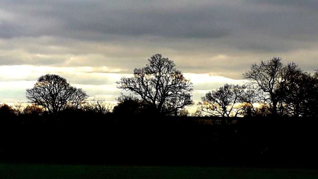 Winter Landscape by mave