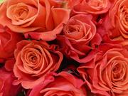 11th Feb 2019 - Orange.Roses