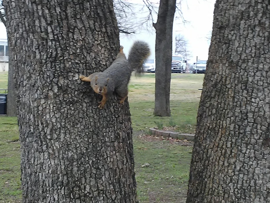 squirrel!!! by ambler
