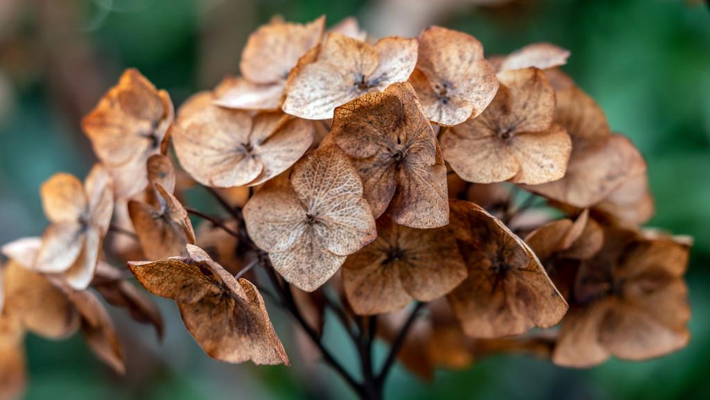 Dead Flower. by tonygig
