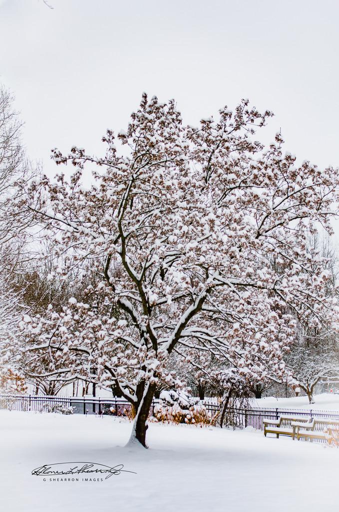 Snow Magic by ggshearron