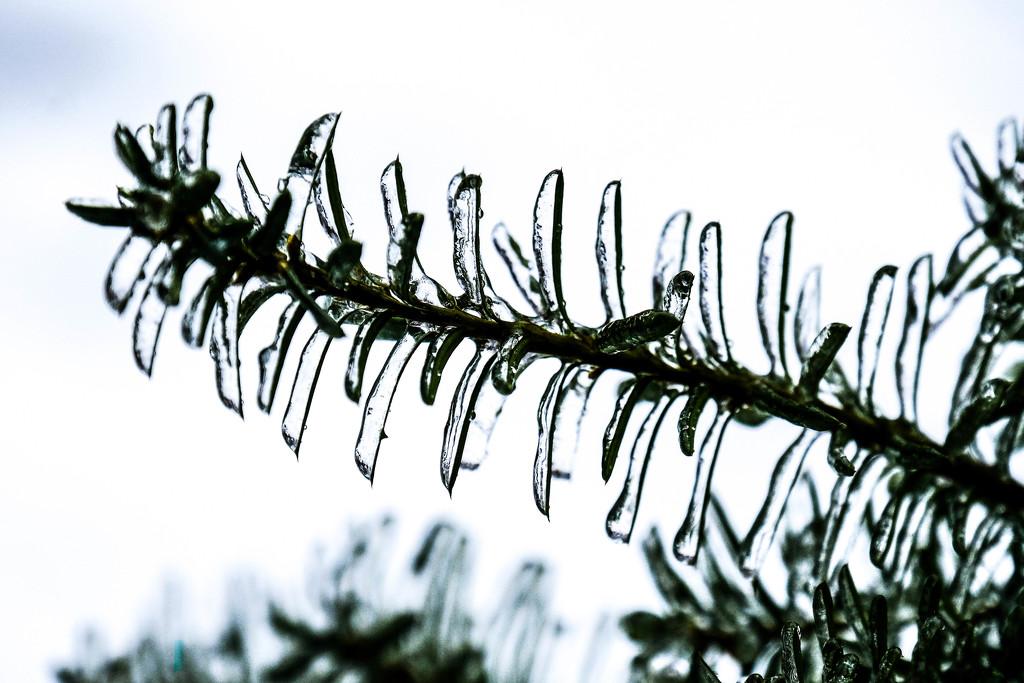 Ice storm  by vera365