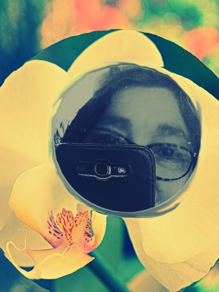 52 Portraits of Me - in Bloom by annied