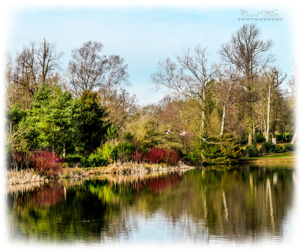 Winter Colours And Reflections by carolmw
