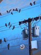 13th Feb 2019 - birdies on wires