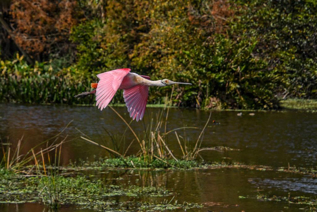 Caught in flight by danette