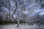 13th Feb 2019 - Winter Wonderland