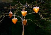 13th Feb 2019 - The Love Tree.