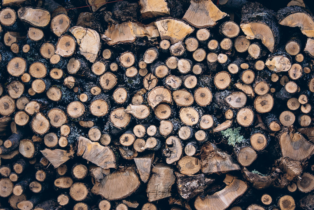 Got wood? by shutterbugger