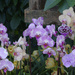 row of orchids