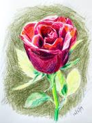 14th Feb 2019 - Valentines Day Rose