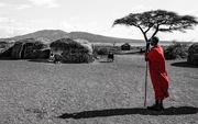 14th Feb 2019 - A Masai Flash of Red