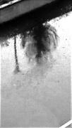 12th Feb 2019 - Reflection - Wet Sidewalk, Wet Window