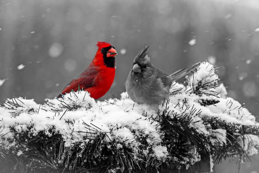 Learning About Selective Coloring by milaniet