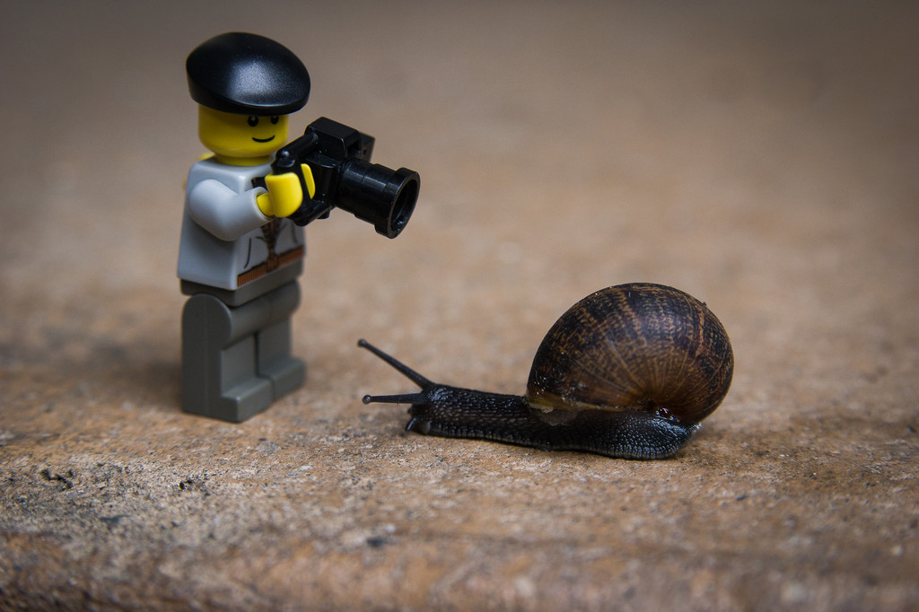 (Day 1) - Starting At a Snail's Pace by cjphoto