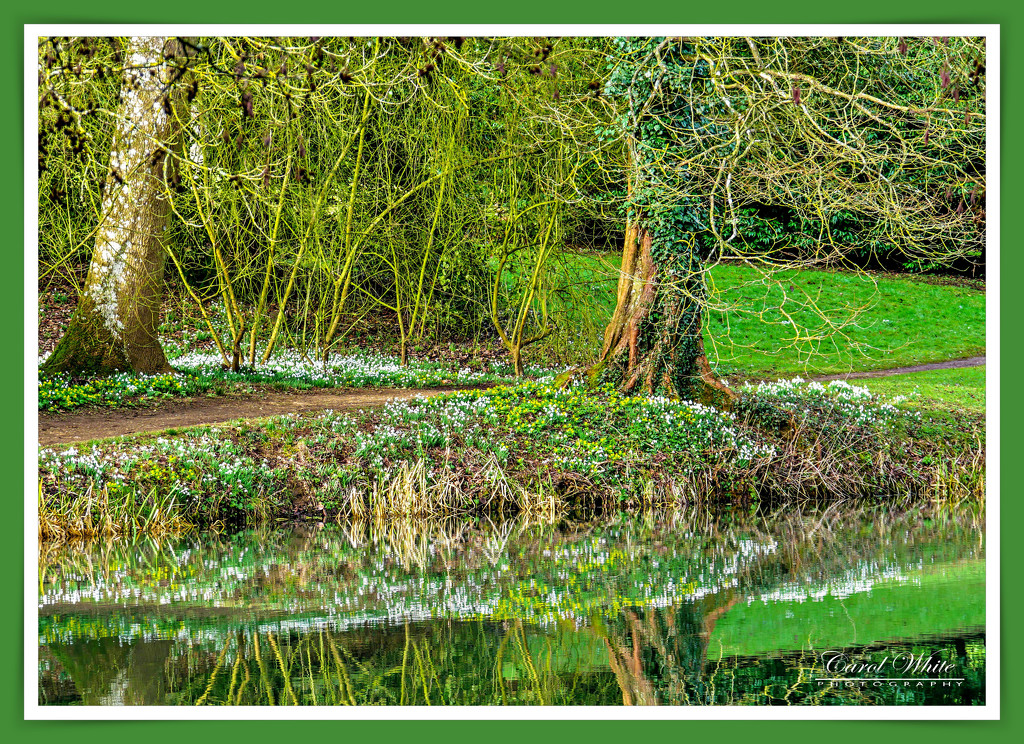 Snowdrops And Reflections by carolmw