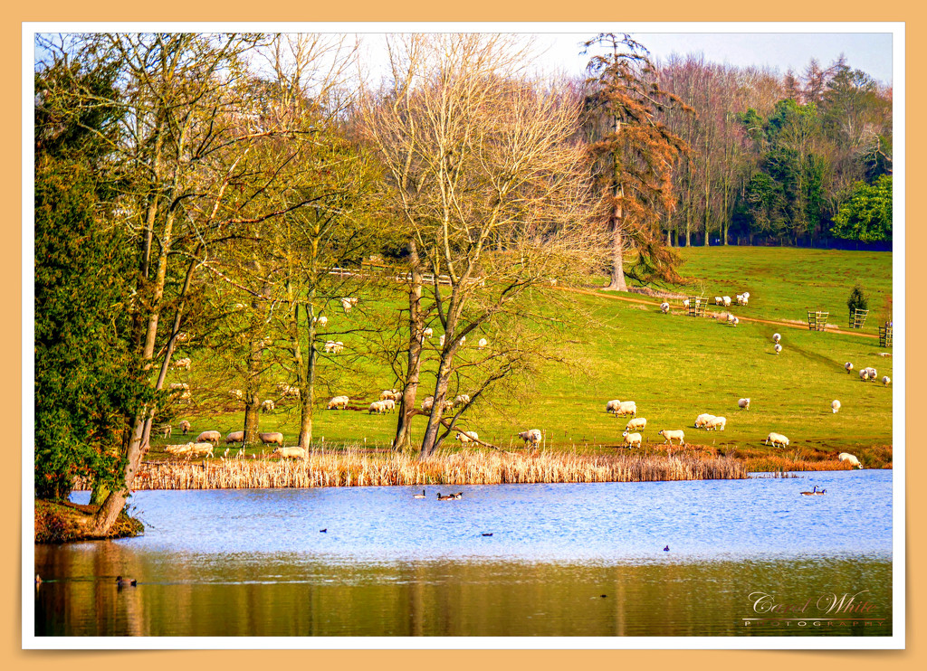 View Across The Lake by carolmw