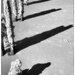 Shadows and Pawprints