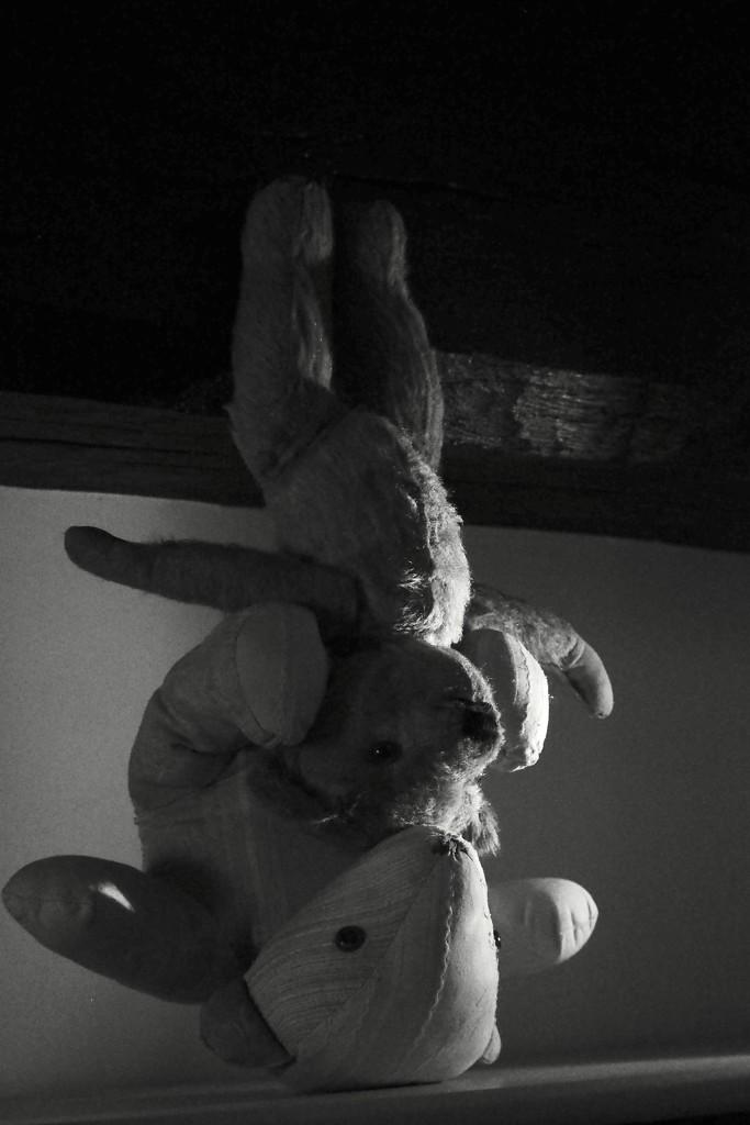 Da-dah...the Bear & Bare Show!  by s4sayer
