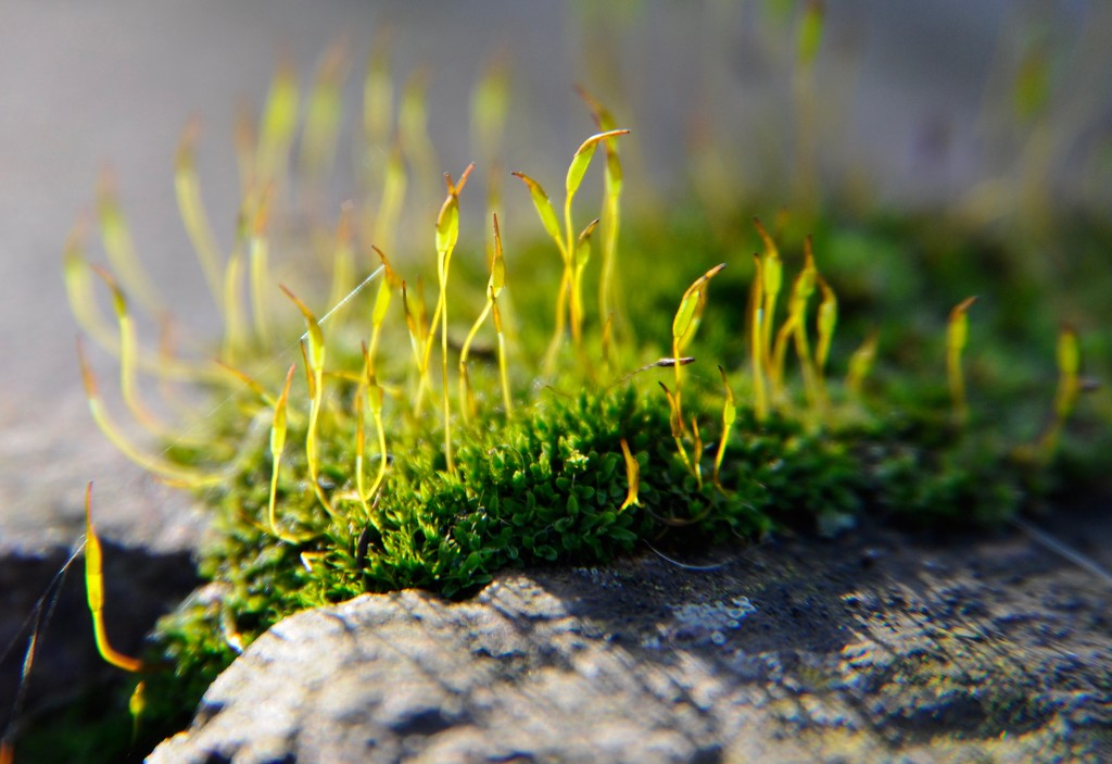 Moss by rosie00