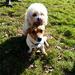 Rory And Yogi
