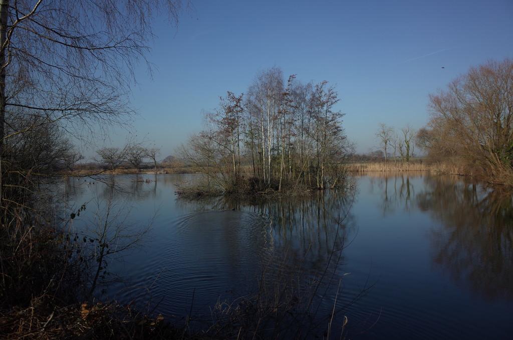 Local pond. by korky
