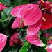 Y10 D046 Succulent