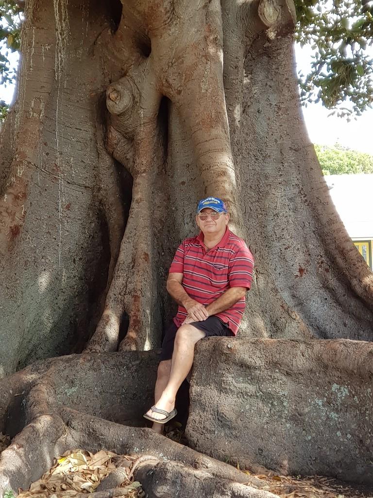 Morton Bay Fig, Kiama NSW by artseyanne