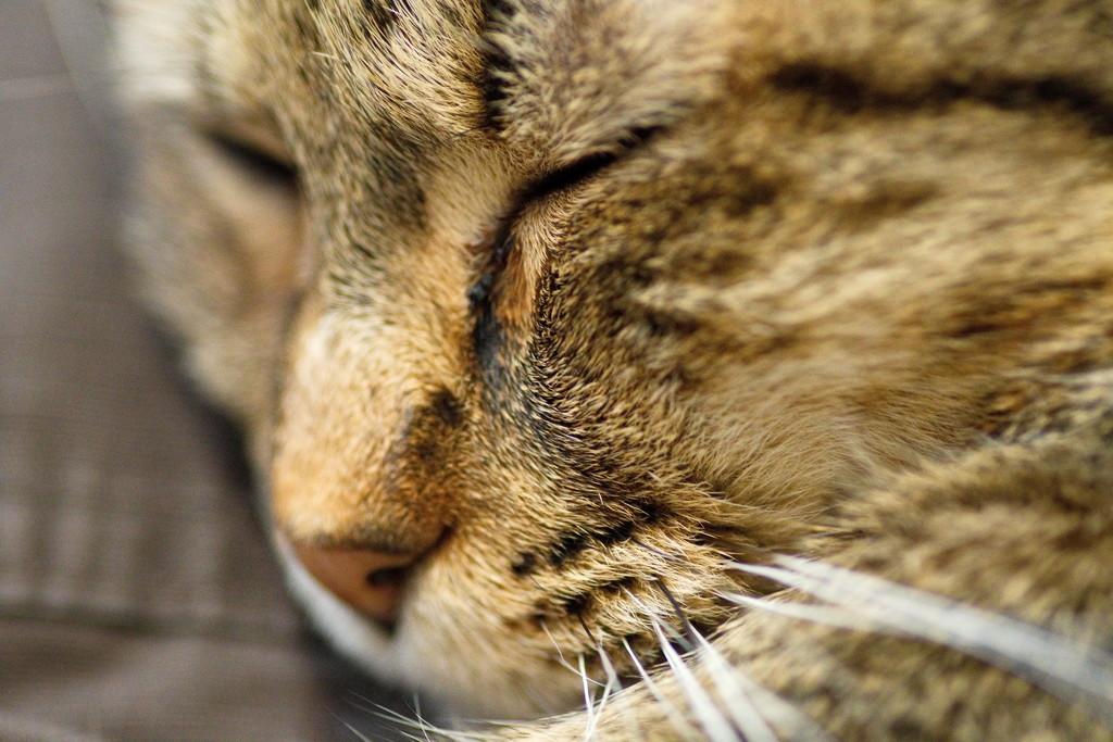 Heavy eyelids by teriyakih