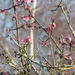 Spindle tree...