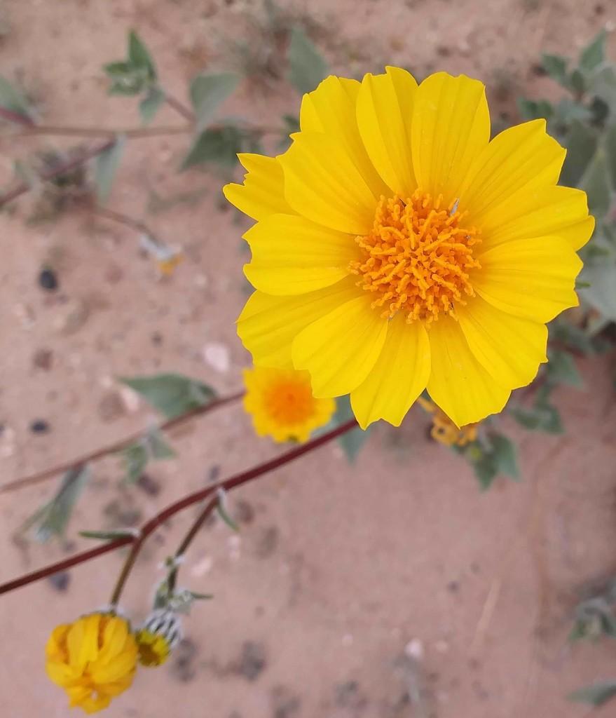 Little Yellow Flower by stownsend