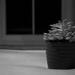 Succulent [3]