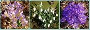 17th Feb 2019 - spring flowers