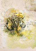 16th Feb 2019 - Tiger Tiger...