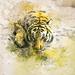 Tiger Tiger...