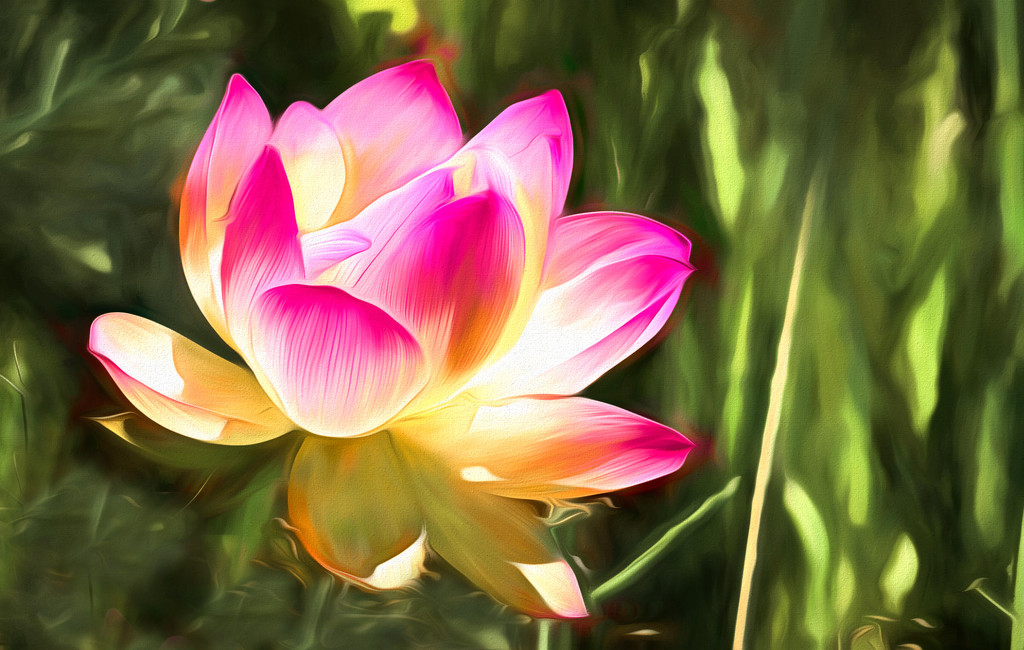 My first Lotus flower by ludwigsdiana