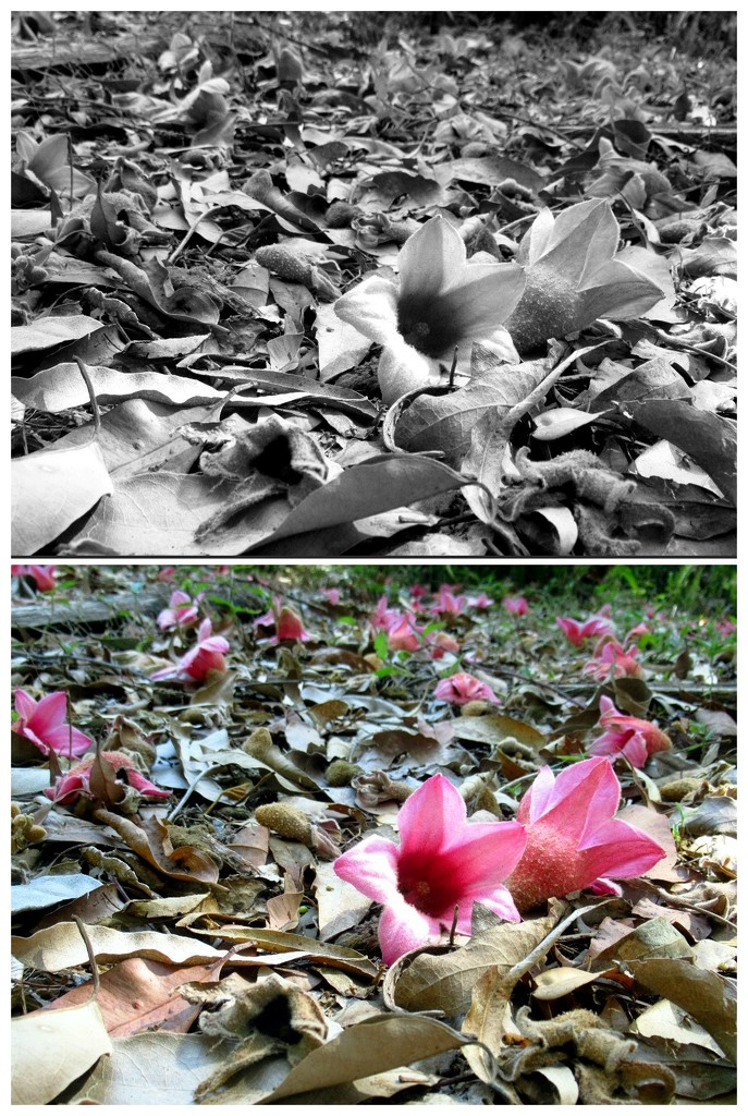 Rain-forest flowers carpet the forest floor. by robz