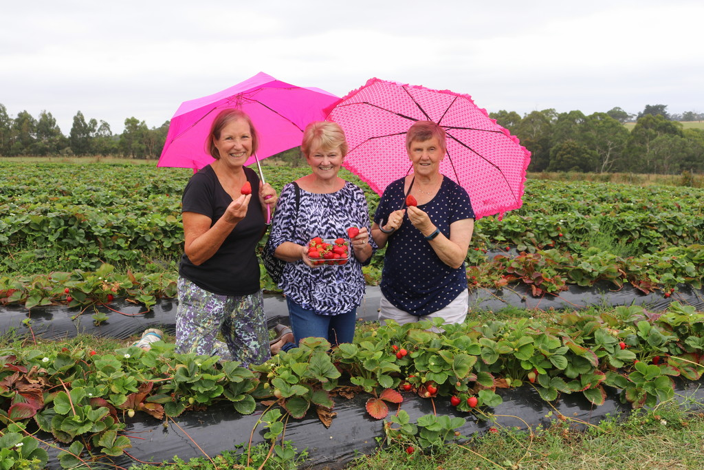 Strawberry pickin' Brolly girls by gilbertwood